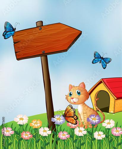 Aluminium Prints Butterflies A cat beside an arrow board