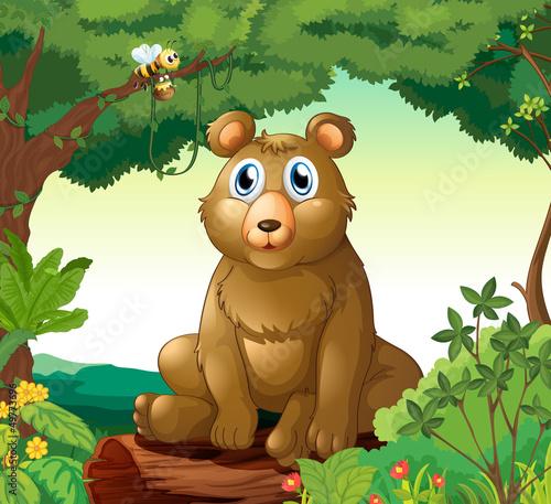 Fotobehang Beren A big bear in the forest