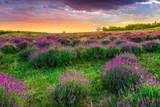 Zachód słońca nad letnim polem lawendy w Tihany, Węgry - 49776819