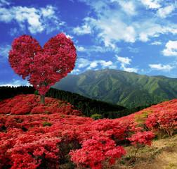 FototapetaTree Heart