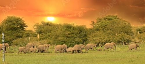 Foto op Aluminium Zuid Afrika Troupeau d'éléphants au coucher de soleil.
