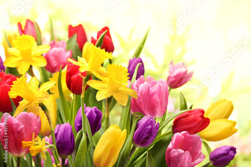 Deurstickers Tulp Colorful tulips and daffodils