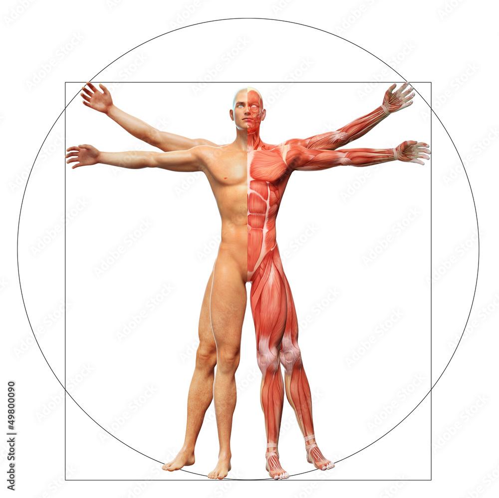 Photo Art Print Human Anatomy As The Vitruvian Man By Leonardo Da