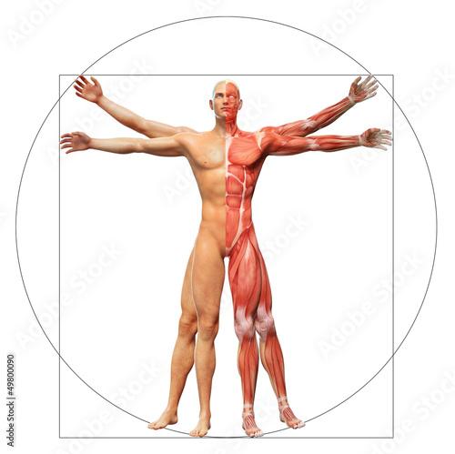 Fotografie, Obraz  Human anatomy as the vitruvian man by Leonardo da Vinci