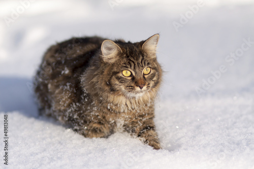 Tuinposter Eekhoorn Cat in the snow