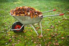 Wheelbarrow Full Of Dried Leaves