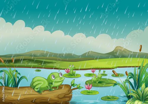 Canvas Prints River, lake Three frogs enjoying the raindrops