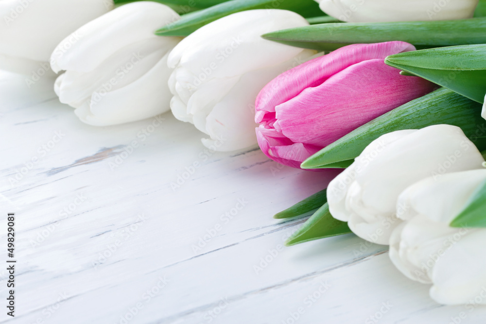 Pink tulip among white tulips