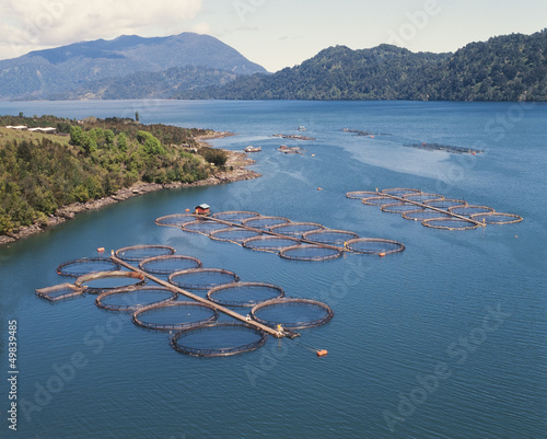 Photo salmon cages