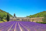 Abbey of Senanque blooming lavender flowers. Gordes, Luberon, Pr - 49856057