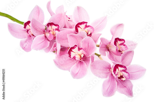 Keuken foto achterwand Orchidee pink orchid flowers isolated