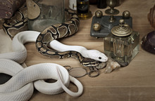 Two Snakes With Vintage Objects