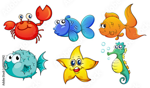 rozne-stworzenia-morskie