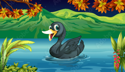 Printed kitchen splashbacks River, lake A black swan at the lake