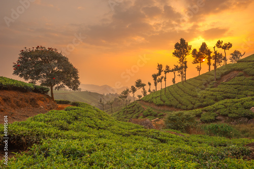 Deurstickers India Tea plantations in Munnar, Kerala, India