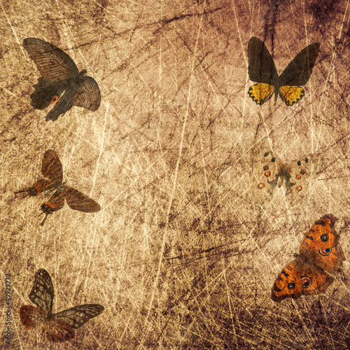 Garden Poster Butterflies in Grunge butterfly wood grunge background