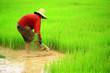 Leinwanddruck Bild - thai farmer