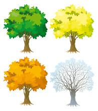 Vector Set. Tree At Four Seasons