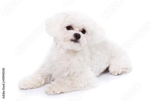 Fényképezés  Portrait of a cute puppy