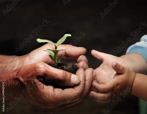Fotografía  grandfather gives his grandson a germ
