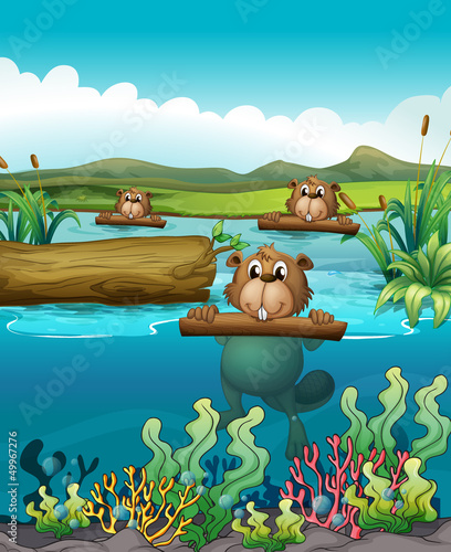 Tuinposter Onderzeeer Three beavers in the river