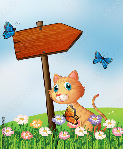 Foto op Canvas Katten An orange cat with a wooden arrow board
