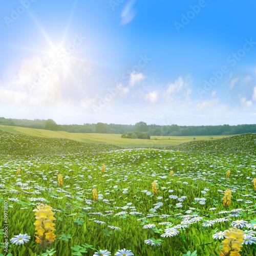 Fotografie, Obraz  Wilde Wiese Butterblumen  Felder unter blauem Himmel