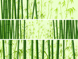 Horizontal banner with many bamboos.