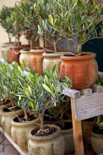 Olivier, provence, sud, arbre, pot, jardin, plante, olive - Buy this ...