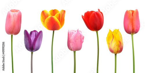 Photo  Spring tulips in assorted colors