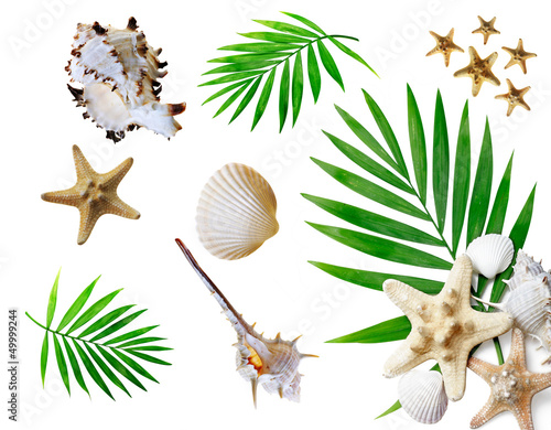 Poster Montagne Summer background with tropical palms and seashells