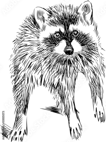 Photo Stands Hand drawn Sketch of animals surprised raccoon