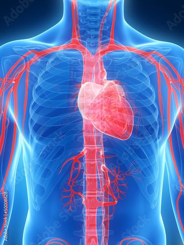 3d-odplacajaca-sie-ilustracja-ludzki-serce