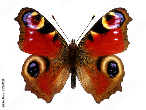 Spoed Foto op Canvas Vlinder European Peacock butterfly (Inachis io)