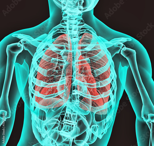 Radiografia aparato respiratorio Poster