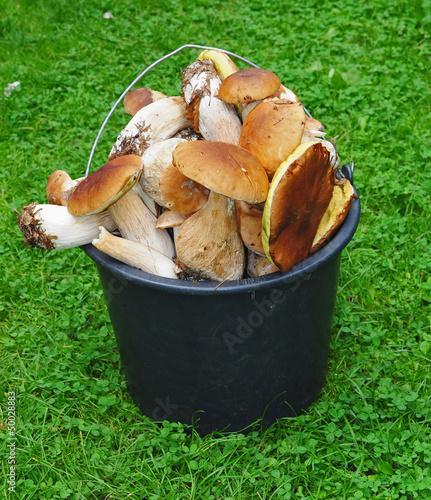Basket of mushrooms in the grass - boletus edulis