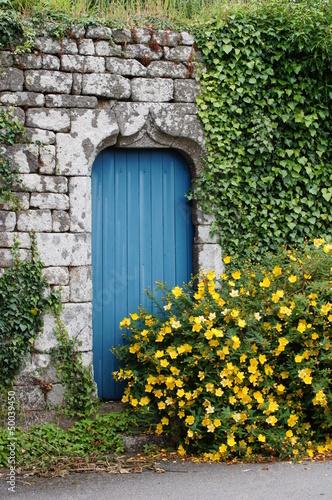 stare-niebieskie-drzwi-zakryte-roslinami