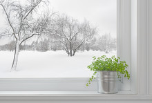 Winter Landscape Seen Through The Window, And Green Plant