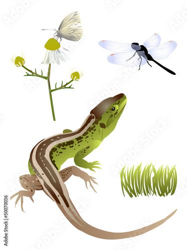 Nature set Wallpaper Mural