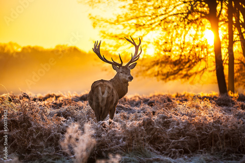 Photo Red deer in morning sun