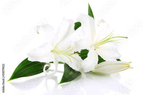 Beautiful lily, isolated on white Wallpaper Mural