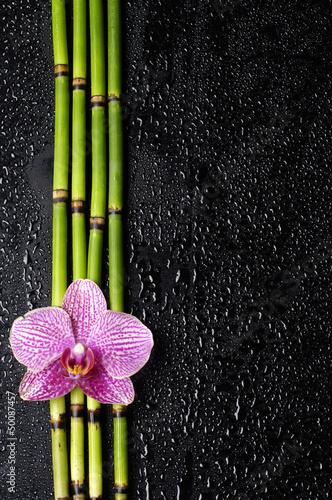 rozowa-orchidea-z-bambusowymi-lodygami-na-czarnym-tle