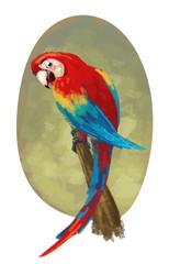 Fototapeta Ptaki pájaro papagayo mascota