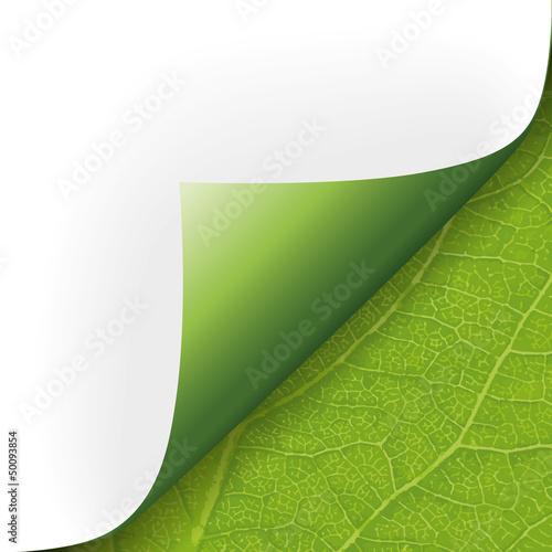 Fotografía  Ecke Papier mit Pflanzenstruktur