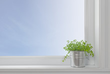 Green Plant On A Window Sill, In A Modern Home