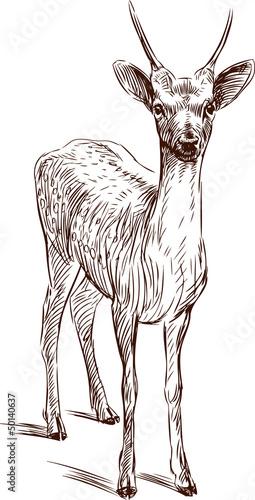 Slika na platnu young deer