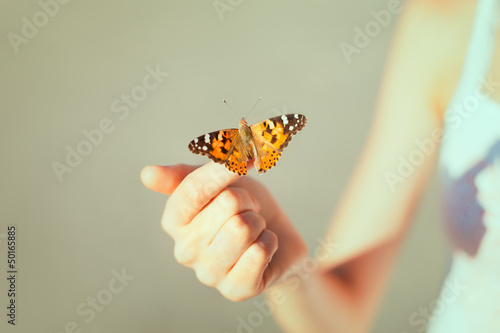 Fotobehang Vlinder Beautiful butterfly