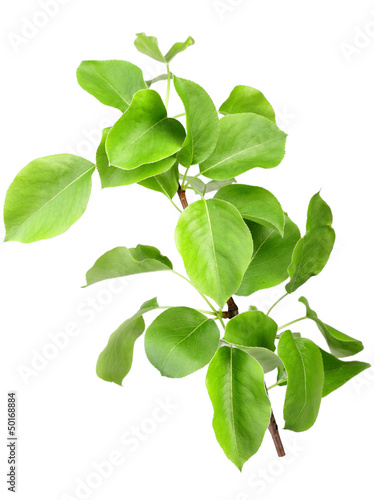 Young green sprout of apple-tree