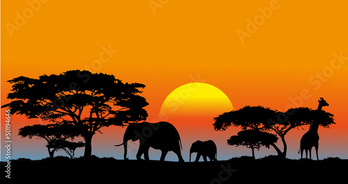 Photo  African savanna