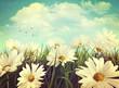Leinwanddruck Bild Vintage look of summer daisies in grass